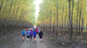 poplar mid run